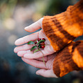 Woman Hands Holding Cranberries by Aldona Pivoriene
