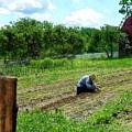 Woman Planting Garden Near Barn by Susan Savad