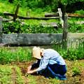Woman Planting Garden by Susan Savad