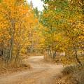 Wonder Filled Path by Lynn Bauer