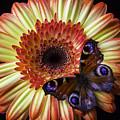 Wonderful Butterfly On Daisy by Garry Gay