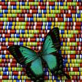 Wonderful Green Butterfly by Garry Gay