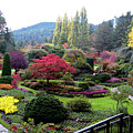 Wonderful Sunken Garden In The Butchart Gardens,victoria,canada 1. by Andrew Kim