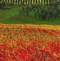 Wonderful Tuscany, Italy - 07  by Andrea Mazzocchetti