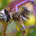 Wonderful Weeds by Lynellen Nielsen