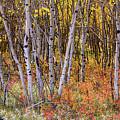 Wonderful Woods Wonderland by James BO Insogna