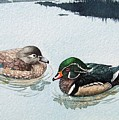 Wood Ducks by Gale Cochran-Smith
