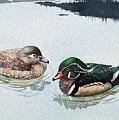 Wood Ducks by Gale Cochran-Smith