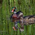Wood Ducks by Randall Ingalls
