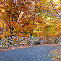 Wood Fence 1 by Jeelan Clark