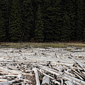 Wood Forest At Duffy Lake by Pierre Leclerc Photography