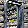 Wood Grain by Bill Keiran