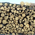 Wood Pile by Barbara Griffin