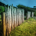 Wood Rail Fence Mendocino County by Blake Webster