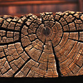 Wood Rings by Carl Purcell
