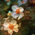 Wood Rose 4886 Idp_22 by Steven Ward