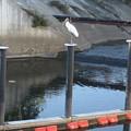 Wood Stork 1 Meander by Stephen Hawks