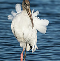 Wood Stork by Mike Fitzgerald