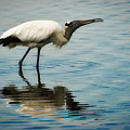 Wood Stork by Rich Leighton
