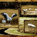 Wood Storks Of Oak Grove Island by Jim Ziemer
