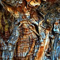 Wood Wrinkles by Lauren Leigh Hunter Fine Art Photography