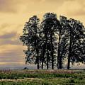 Woodburn Oregon - Sky Lights by Image Takers Photography LLC - Laura Morgan
