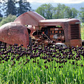Woodburn Oregon - Tractor And Field Of Tulips by Image Takers Photography LLC - Laura Morgan