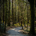 Wooded Path At Coole Park by James Truett
