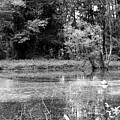 Wooded Pond by Stephanie Pierce