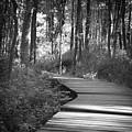 Wooded Walk by Scott Wyatt
