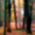 Wooded Wonderland by Paul Sachtleben