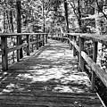 Wooden Boardwalk B by John Myers