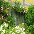 Wooden Door Climbing Roses Secret Garden by Beverly Claire Kaiya