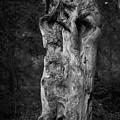 Wooden Face 2 by Jouko Lehto
