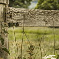 Wooden Fence Post. by Mike Walker