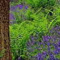 Woodland Bluebells by Martyn Arnold