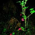Woodland Bush by Mel Crist