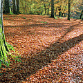 Woodland Floor In Autumn by Dave Bowman