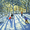 Woodland In Winter by Andrew Macara