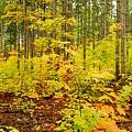 Woodland Panorama by Michael Peychich