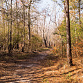 Woodland Path In Autumn At Waccamaw River Park by MM Anderson