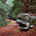 Woodland Path Naugatuck State Forest by Tony Ramos
