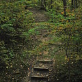 Woodland Steps by Michelle Hastings