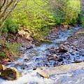 Woodland Stream And Waterfall, Hickory Run, Pocono Mountains by A Gurmankin