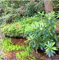 Woodland Stream Forest Interior by A Gurmankin