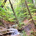 Woodland Stream by Terri Gostola