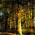 Woodland Tapestry by Paul Sachtleben