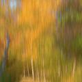Woodland Walk by John Fotheringham
