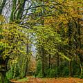 Woodland Walks #1 by Frank Etchells