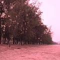 Woodlands At The Beach by Pusita Gibbs